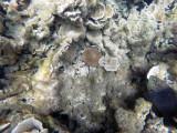 84 - Snorkeling ile Rodrigues janvier 2017 - GOPR5942 DxO Pbase.jpg