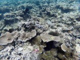 86 - Snorkeling ile Rodrigues janvier 2017 - GOPR5944 DxO Pbase.jpg