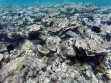 89 - Snorkeling ile Rodrigues janvier 2017 - GOPR5947 DxO Pbase.jpg