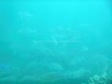 95 - Snorkeling ile Rodrigues janvier 2017 - P1010061 DxO Pbase.jpg