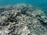 98 - Snorkeling ile Rodrigues janvier 2017 - GOPR5953 DxO Pbase.jpg
