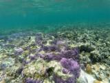 174 - Snorkeling ile Rodrigues janvier 2017 - GOPR6015 DxO Pbase.jpg