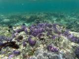 177 - Snorkeling ile Rodrigues janvier 2017 - GOPR6018 DxO Pbase.jpg