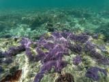 178 - Snorkeling ile Rodrigues janvier 2017 - GOPR6019 DxO Pbase.jpg