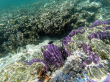 181 - Snorkeling ile Rodrigues janvier 2017 - GOPR6022 DxO Pbase.jpg