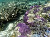 182 - Snorkeling ile Rodrigues janvier 2017 - GOPR6023 DxO Pbase.jpg