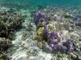 183 - Snorkeling ile Rodrigues janvier 2017 - GOPR6024 DxO Pbase.jpg