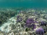 184 - Snorkeling ile Rodrigues janvier 2017 - GOPR6025 DxO Pbase.jpg