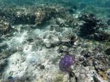 187 - Snorkeling ile Rodrigues janvier 2017 - GOPR6028 DxO Pbase.jpg