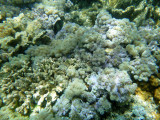 193 - Snorkeling ile Rodrigues janvier 2017 - P1010079 DxO Pbase.jpg