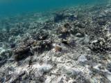 199 - Snorkeling ile Rodrigues janvier 2017 - GOPR6036 DxO Pbase.jpg