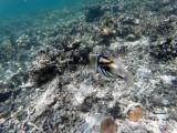 200 - Snorkeling ile Rodrigues janvier 2017 - GOPR6037 DxO Pbase.jpg
