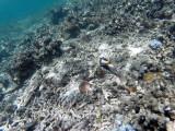 203 - Snorkeling ile Rodrigues janvier 2017 - GOPR6040 DxO Pbase.jpg