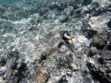 205 - Snorkeling ile Rodrigues janvier 2017 - GOPR6042 DxO Pbase.jpg