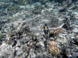 207 - Snorkeling ile Rodrigues janvier 2017 - GOPR6044 DxO Pbase.jpg