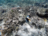 209 - Snorkeling ile Rodrigues janvier 2017 - GOPR6046 DxO Pbase.jpg