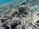 213 - Snorkeling ile Rodrigues janvier 2017 - GOPR6050 DxO Pbase.jpg