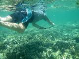 218 - Snorkeling ile Rodrigues janvier 2017 - P1010081 DxO Pbase.jpg