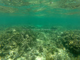 245 - Snorkeling ile Rodrigues janvier 2017 - GOPR6077 DxO Pbase.jpg