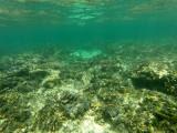 248 - Snorkeling ile Rodrigues janvier 2017 - GOPR6080 DxO Pbase.jpg