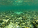 249 - Snorkeling ile Rodrigues janvier 2017 - GOPR6081 DxO Pbase.jpg