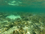 250 - Snorkeling ile Rodrigues janvier 2017 - GOPR6082 DxO Pbase.jpg