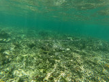 255 - Snorkeling ile Rodrigues janvier 2017 - GOPR6087 DxO Pbase.jpg