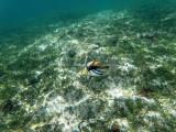 286 - Snorkeling ile Rodrigues janvier 2017 - GOPR6118 DxO Pbase.jpg