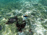 287 - Snorkeling ile Rodrigues janvier 2017 - GOPR6119 DxO Pbase.jpg