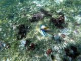 295 - Snorkeling ile Rodrigues janvier 2017 - GOPR6127 DxO Pbase.jpg