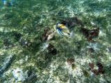 296 - Snorkeling ile Rodrigues janvier 2017 - GOPR6128 DxO Pbase.jpg
