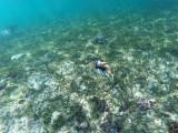 297 - Snorkeling ile Rodrigues janvier 2017 - GOPR6129 DxO Pbase.jpg