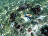 300 - Snorkeling ile Rodrigues janvier 2017 - GOPR6132 DxO Pbase.jpg