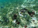 302 - Snorkeling ile Rodrigues janvier 2017 - GOPR6134 DxO Pbase.jpg