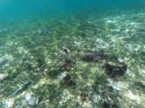 310 - Snorkeling ile Rodrigues janvier 2017 - G0016142 DxO Pbase.jpg