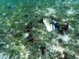 312 - Snorkeling ile Rodrigues janvier 2017 - G0026144 DxO Pbase.jpg