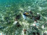 313 - Snorkeling ile Rodrigues janvier 2017 - G0026145 DxO Pbase.jpg