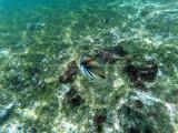 314 - Snorkeling ile Rodrigues janvier 2017 - G0026146 DxO Pbase.jpg