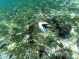318 - Snorkeling ile Rodrigues janvier 2017 - G0036150 DxO Pbase.jpg