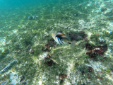 320 - Snorkeling ile Rodrigues janvier 2017 - G0036152 DxO Pbase.jpg