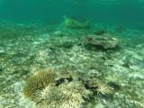 327 - Snorkeling ile Rodrigues janvier 2017 - GOPR6159 DxO Pbase.jpg