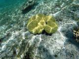 333 - Snorkeling ile Rodrigues janvier 2017 - GOPR6165 DxO Pbase.jpg