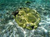 336 - Snorkeling ile Rodrigues janvier 2017 - GOPR6168 DxO Pbase.jpg