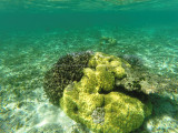 347 - Snorkeling ile Rodrigues janvier 2017 - GOPR6179 DxO Pbase.jpg