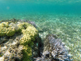 348 - Snorkeling ile Rodrigues janvier 2017 - GOPR6180 DxO Pbase.jpg