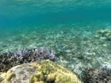350 - Snorkeling ile Rodrigues janvier 2017 - GOPR6182 DxO Pbase.jpg