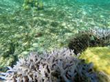 357 - Snorkeling ile Rodrigues janvier 2017 - GOPR6189 DxO Pbase.jpg