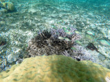 359 - Snorkeling ile Rodrigues janvier 2017 - GOPR6191 DxO Pbase.jpg