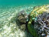 361 - Snorkeling ile Rodrigues janvier 2017 - GOPR6193 DxO Pbase.jpg