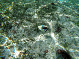 368 - Snorkeling ile Rodrigues janvier 2017 - GOPR6200 DxO Pbase.jpg